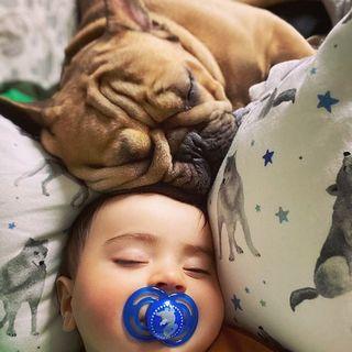 LOVE! 🐶 Kto ma w domu takiego przytulasa? foto: @mmemacaron2205 #maylily #love #bamboo #pillow #wilkiway www.maylily.pl